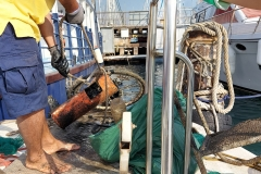 Sea-bch-cleaning-campaign-11.11-1