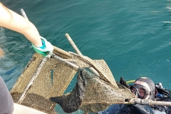 Sea-bch-cleaning-campaign-11.11-27